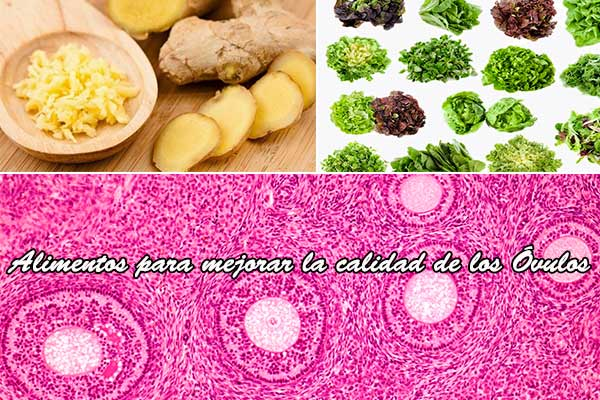 alimentos para mejorar la calidad de los ovulos